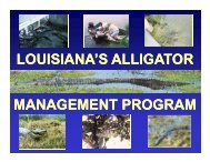 Louisiana's Alligator Management Program - Louisiana Fisheries