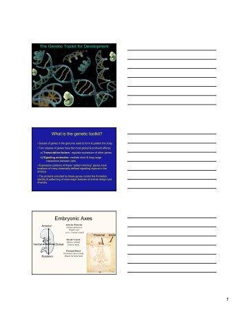 The Genetic Toolkit for Development - Biology Major