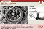 Meloidogyne incognita - Manosanta