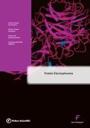 Protein Electrophoresis brochure
