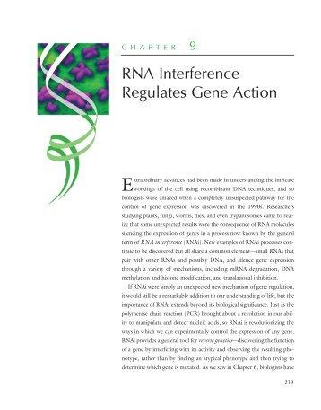 RNA Interference Regulates Gene Action - W.H. Freeman