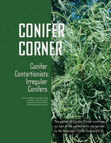 Irregular conifers - Department of Horticulture - Michigan State ...