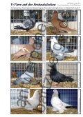 V-Tiere auf der Frohnatalschau - Antwerpener Bartzwerge - Seite 4