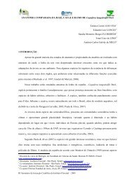 ANATOMIA COMPARADA DA RAIZ, CAULE E ... - Instituto Florestal