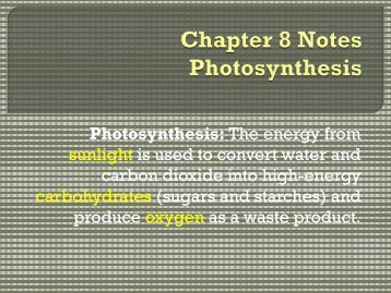 Chapter 8 Notes Photosynthesis