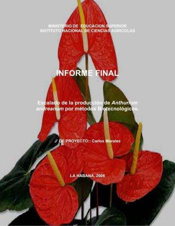 Escalado de la producción de Anthurium andreanum por métodos ...