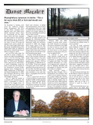 P. Ramorum in Antrim - Forestry Journal