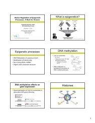 Redox Regulation of Epigenetic Processes - Columbia University