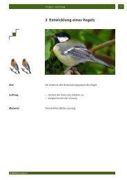 2 Entwicklung eines Vogels
