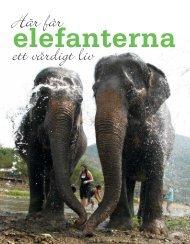 Här får elefanterna ett värdigt liv - Free