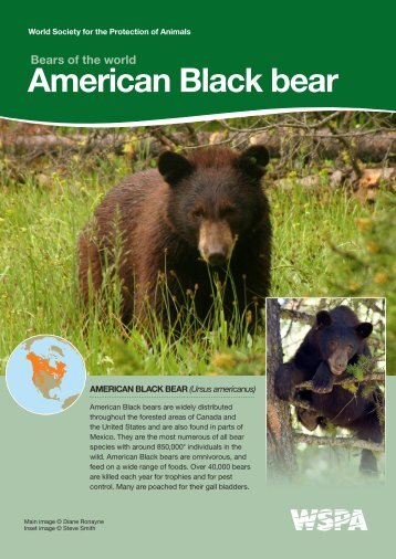American Black bear - WSPA