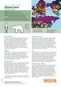 American Black bear - WSPA - Page 6