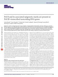 Pol II and its associated epigenetic marks are present at Pol III ...