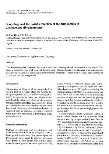 Karyology and the possible function of the dual conidia of ... - Springer