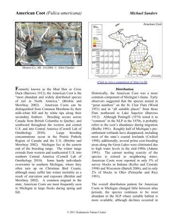 American Coot - Michigan Breeding Bird Atlas Website