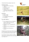 Hjortejagt i Polen 2010 - Korsholm Jagtrejser - Page 2