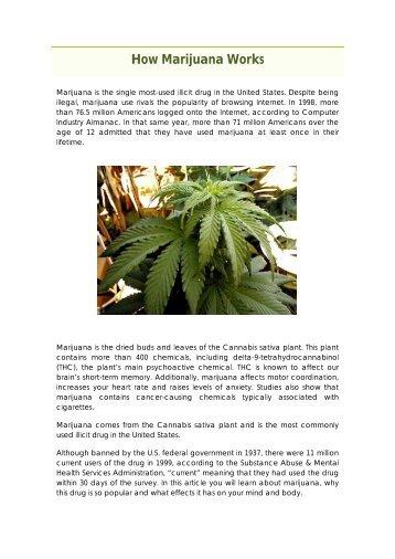 How Marijuana Works - Hampapartiet