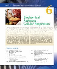 Biochemical Pathways— Cellular Respiration