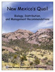 New Mexico's Quail - New Mexico Game and Fish
