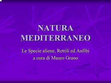 Mauro Grano - Natura Mediterraneo