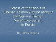 Taimen - Hucho Sea-run taimen - Parahucho - State of the Salmon