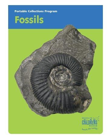 Fossils - Brooklyn Children's Museum