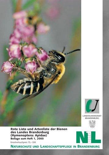 Rote Liste der Bienen - LUGV - Land Brandenburg