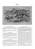 Afrika - Seite 3