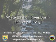 White Salmon River Basin Lamprey Survey