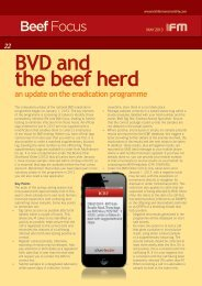 BVD and the beef herd - Animal Health Ireland