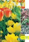 Trendfarben des Frühlings Trendfarben des ... - grneprofis-beb.ch - Seite 3