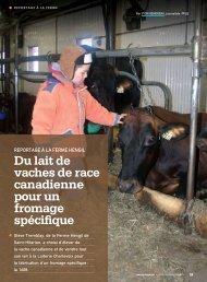 du lait de vaches de race canadienne pour un fromage spécifique