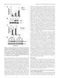 Neuronal Apoptosis Induced by Endoplasmic ... - Brain Canada - Page 7