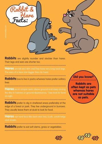 Rabbits - Motlies