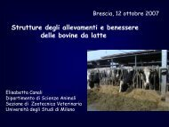 Strutture degli allevamenti e benessere delle bovine da latte