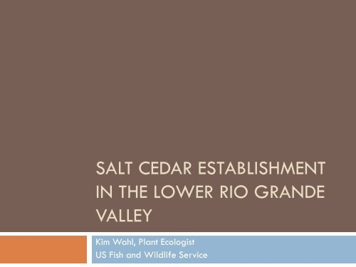 salt cedar establishment in the lower rio grande valley