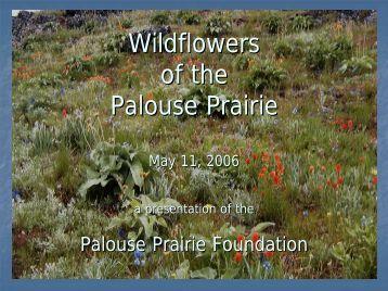 Wildflowers of the Palouse Prairie - Palouse Prairie Foundation
