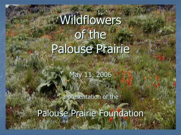 Wildflowers of the Palouse Prairie - Palouse Prairie Foundation