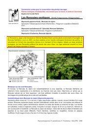 Les Renouées exotiques (famille Polygonaceae, Polygonacées)