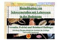 Bioindikation von Schwermetallen mit Lebewesen in der Bodenzone