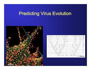 presentation, part 2 - Molecular Evolution