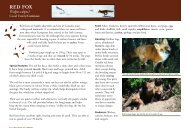 RED FOX - Fur Institute of Canada
