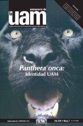 Panthera onca: - UAM. Comunicación Social
