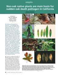 Non-oak native plants are main hosts for sudden oak death ...