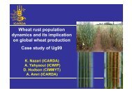 Wheat rust population dynamics and its implication on ... - BIOGOV unit