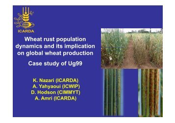 Wheat rust population dynamics and its implication on ... - BIOGOV unit