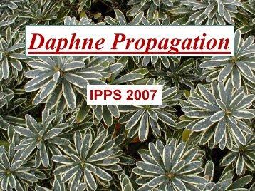Daphne Propagation