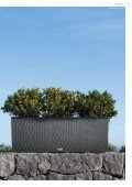 "Lechuza-Katalog ""Trend-Collektuin"" - Gartencenter Stassen - Seite 5"