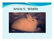 Article 5: Wildlife by Paul Irngaut - Nunavut Tunngavik Inc.