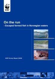 2 Atlantic salmon - Norske Lakseelver